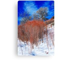 Winter in Colorado Canvas Print