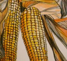 Drying sweetcorn, Italy pen and wash 2010 Sticker