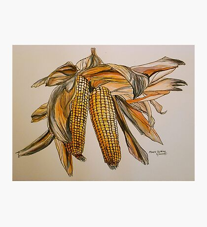 Drying sweetcorn, Italy pen and wash 2010 Photographic Print