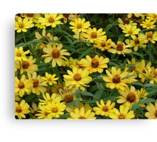 """""""Daisies"""" by Carter L. Shepard""""  Canvas Print"""