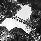 Otways Forest Dec 2015 by geof