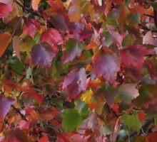 Foliage Immersion Sticker