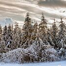 Winter Wonderland by PhotosByHealy