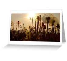 Dandelion Eclipse Greeting Card
