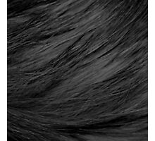 LONG HAIRED BLACK CAT FUR Photographic Print