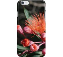 Red flowering Gum _ bursting forth iPhone Case/Skin