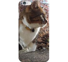photo of my cat iPhone Case/Skin