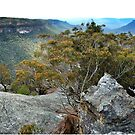 View over the Wolgan Valley by Marilyn Harris