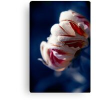 Drops White Flower Canvas Print