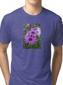 Purple and Pink African Daisy Flowers Tri-blend T-Shirt