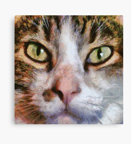 Long Haired Tabby Cat Close Up Portrait Canvas Print
