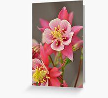 Pink columbine flowers Greeting Card