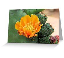 Orange Cactus Flower Greeting Card