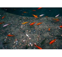 Orange Fish Pond Photographic Print