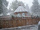 Coppola in the snow by waddleudo