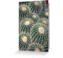 Prickly little cactus Greeting Card