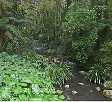 Creek, Border Ranges National Park by Margaret  Hyde