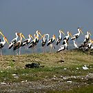 Painted storks by magiceye