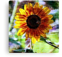 Sunflower On The Wall  Canvas Print