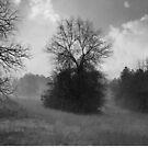 Following the Fog by Scott Mitchell