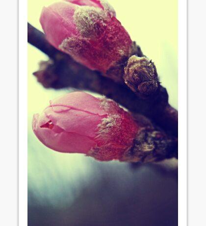 pink buds Sticker