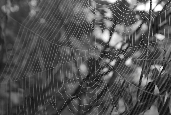 a Spiders world by Scott Ferguson