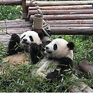Young Giant Pandas by SusanAdey