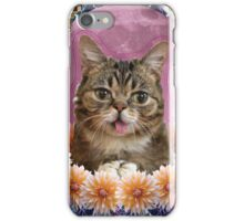 internet cat paradise iPhone Case/Skin