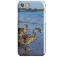 Black Swan (Cygnus atratus)  iPhone Case/Skin