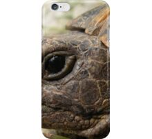 Close Up Side Portrait Of A Turkish Tortoise iPhone Case/Skin