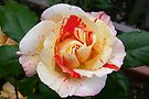 Rose of Beauty by LoneAngel