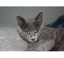 Beautiful Portrait of A Grey Russian Cross Tabby Cat Photographic Print