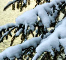 Snow on branches Sticker