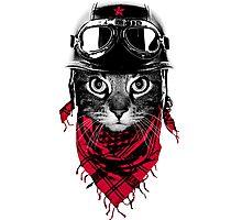 The Adventurer Cat Photographic Print