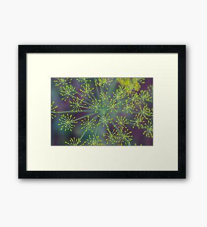 Dill Plant Framed Print