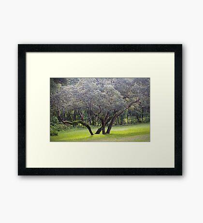 Wild Oak Framed Print