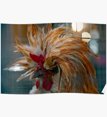 Majestic Mystery Chicken Poster