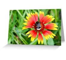 Flower and Bumblebee Greeting Card