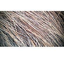 Grass Studies, Winter Wind Photographic Print