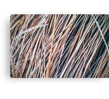 Grass Studies, Winter Wind II Canvas Print