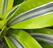 Tropical plant Sticker