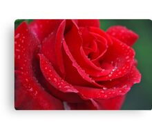 Single red rose with rain drops Canvas Print