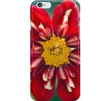 Red dahlia flower iPhone Case/Skin