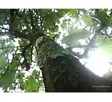 Branch Photographic Print