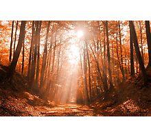 Path to Heaven Photographic Print