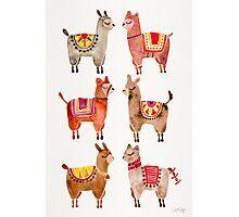 Alpacas Photographic Print
