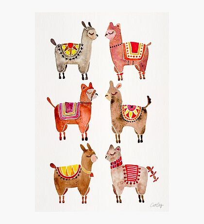 Alpacas Photographic Print