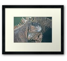 IGUANA - THE REFLECTIVE REPTILE Framed Print