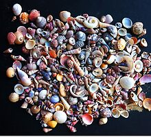 Tiny shells by Roz McQuillan