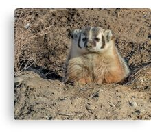 Brown Noser Badger Canvas Print